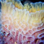 Spectacular Sponges